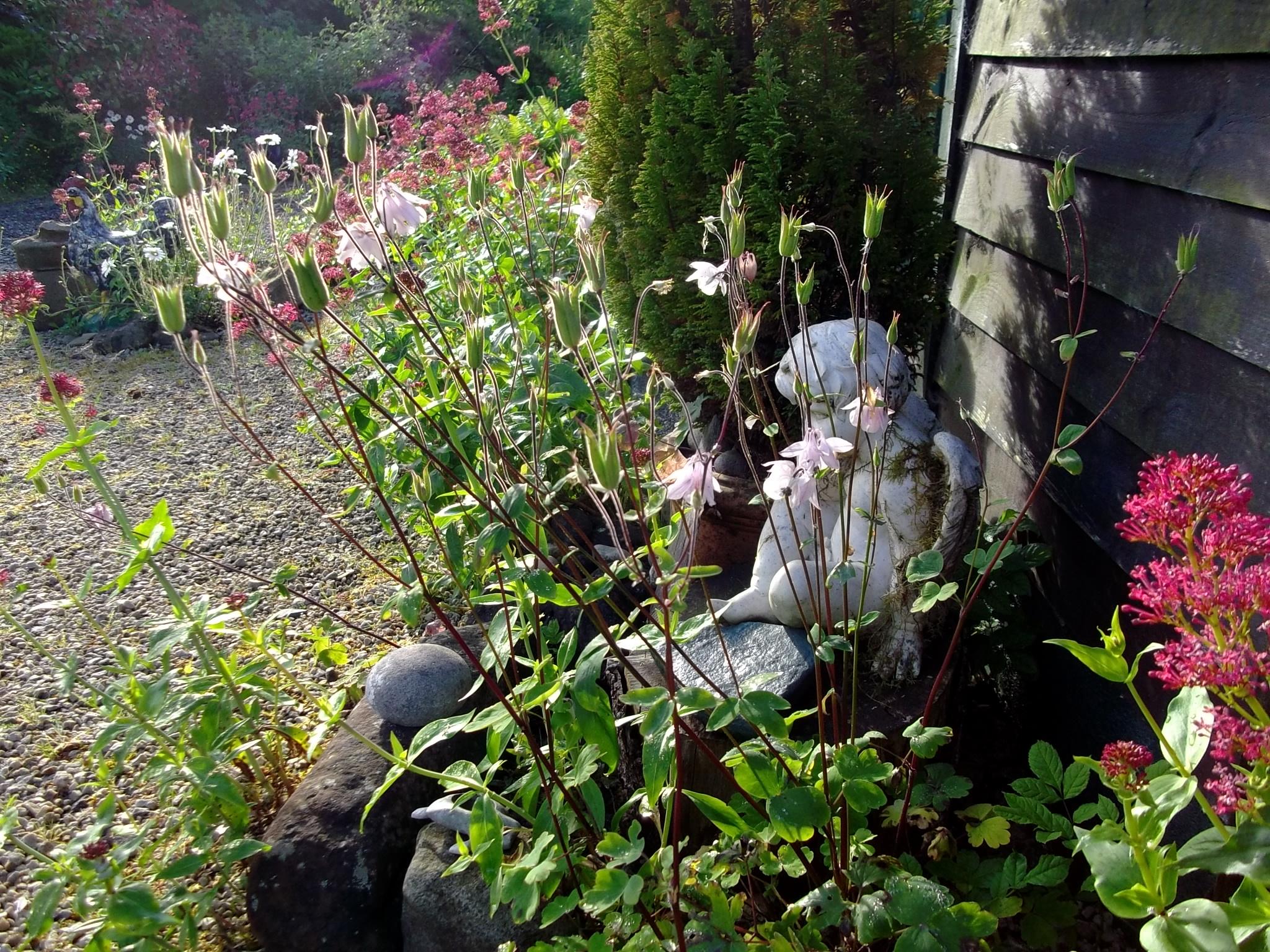 Angel on Midsummer morning