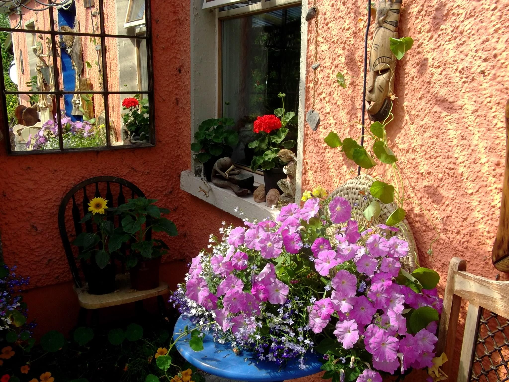 Petunias in pot on veranda table